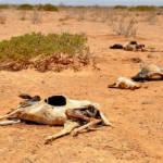 Der Wassermangel in Ostafrika Der Wassermangel führt zum Viehsterben. | Bild (Ausschnitt): © Oxfam International [CC BY-NC-ND 2.0] - flickr