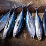 Fische auf einem Markt in Somalia Fischfang stellte eine wichtige Einnahmequelle und Nahrungssicherung dar.   Bild (Ausschnitt): © AMISOM Public Information [CC0 1.0] - Flickr