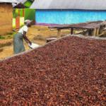 Kakaoarbeiterin Ghana In Ghana sind Millionen von Menschen auf die Einnahmen durch den Kakaoanbau angewiesen | Bild (Ausschnitt): © Francesco Veronesi [CC BY-SA 2.0] - Flickr