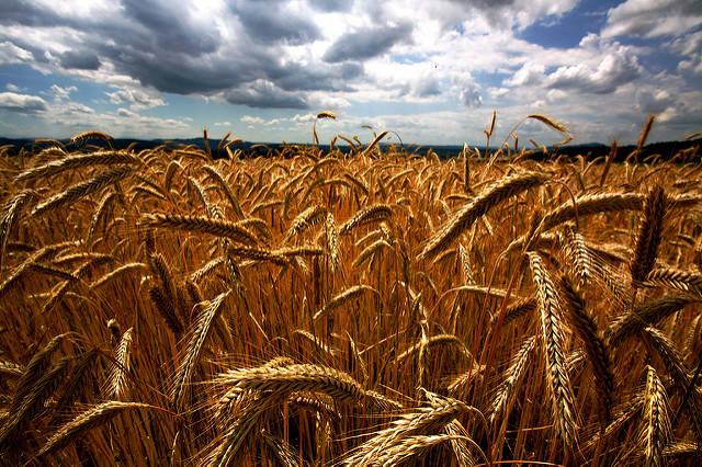 Getreidepreisspekulation NGOs gehen davon aus, dass die Nahrungsmittelpreiskrise 2007 - 2008 von Getreidepreisspekulationen ausgelöst wurde. | Bild: © Falk Lademann [CC BY 2.0]  - Flickr