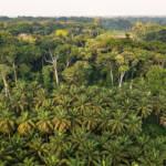Palmölplantage in der Demokratischen Republik Kongo | Bild (Ausschnitt): © CIFOR [CC BY-NC-ND 2.0] - flickr
