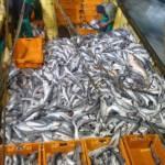Trawler Fisch-Trawler
