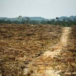 Abholzung des Regenwalds Das Foto belegt zwei nicht genannte, Palmölplantangen in West-Kalimantan, Indonesien, die von Cargill betrieben werden | Bild (Ausschnitt): © Rainforest Action Network [CC BY-NC 2.0] - Flickr