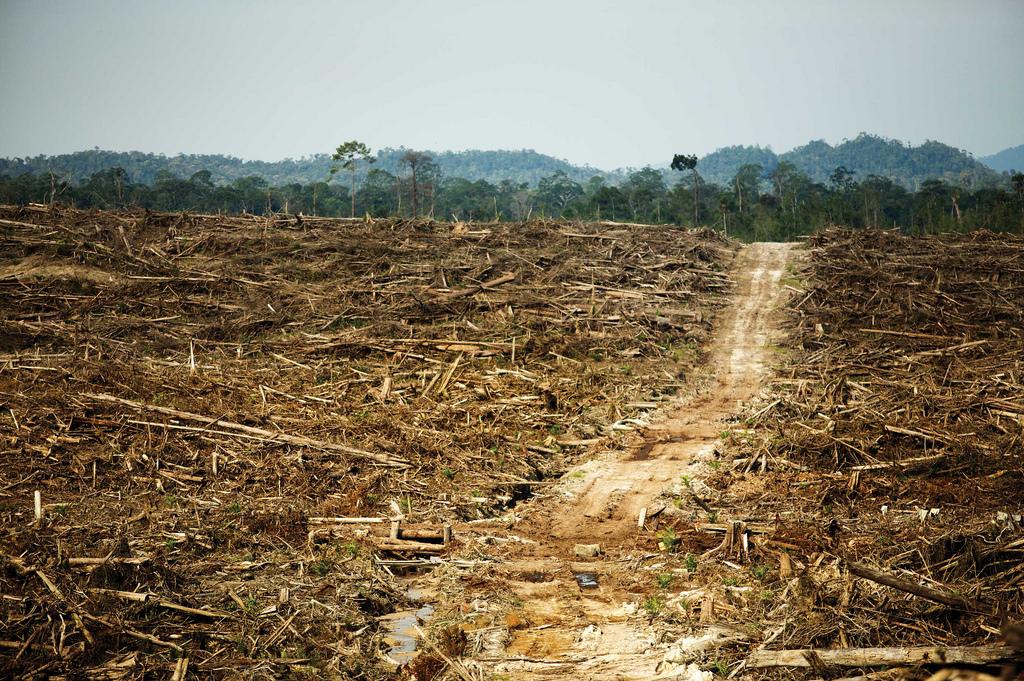 Abholzung des Regenwalds