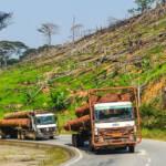 Abholzung Gabun Korrupte Holzlieferanten verkaufen illegales Holz in die USA | Bild (Ausschnitt): © jbdodane [CC BY-NC 2.0] - flickr