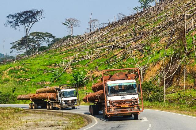 Abholzung Gabun