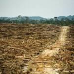 Entwaldung für eine Palmöl Plantage | Bild (Ausschnitt): © Rainforest Action Network [CC BY-NC 2.0] - Flickr