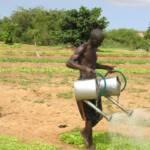 Senegalesischer Bauer beim Bewässern seines Feldes Senegalesischer Bauer beim Bewässern seines Feldes | Bild (Ausschnitt): © Rikolto (Vredeseilanden) [CC BY-NC 2.0] - Flickr