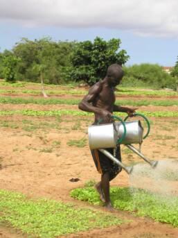 Senegalesischer Bauer beim Bewässern seines Feldes Senegalesischer Bauer beim Bewässern seines Feldes    Bild: © Rikolto (Vredeseilanden) [CC BY-NC 2.0]  - Flickr