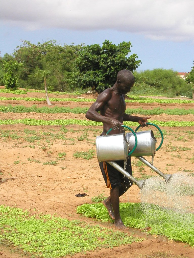 Senegalesischer Bauer beim Bewässern seines Feldes