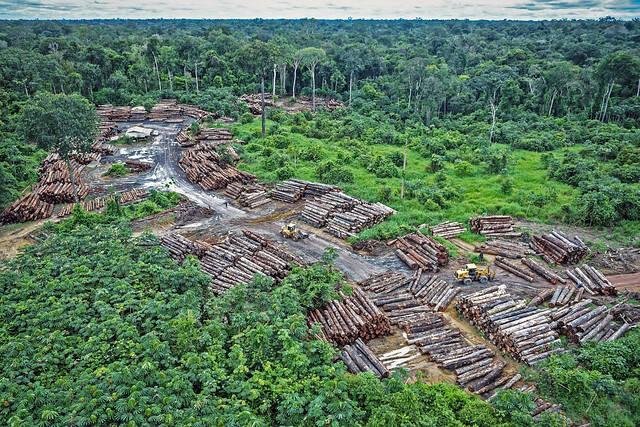 Amazonas Abholzung Der Amazonas-Regenwald brennt aufgrund von Abholzung. Pirititi, Brasilien  |  Bild: © Karl-Ludwig Poggemann [ (CC BY 2.0) ]  - flickr